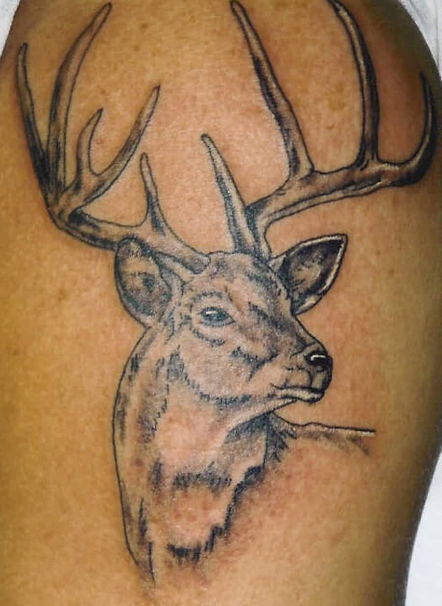 deer tattoo images amp designs
