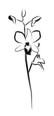 Outline Orchid Flower Tattoo Design