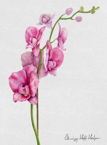 Pink Flowers Orchid Tattoos Design