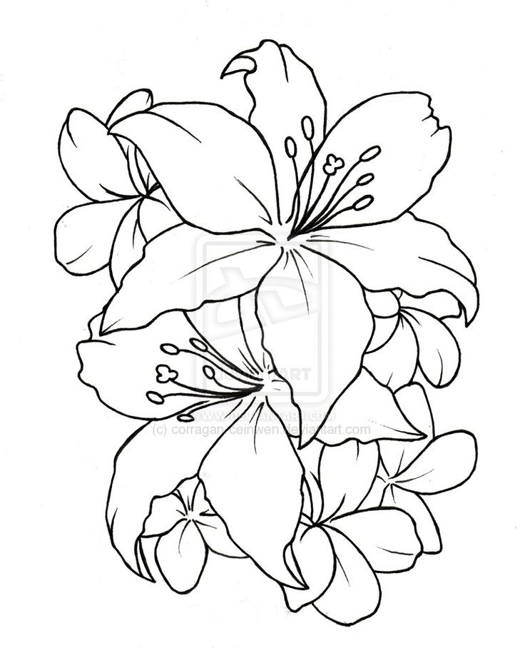 Outline Lily Flower Tattoos Design