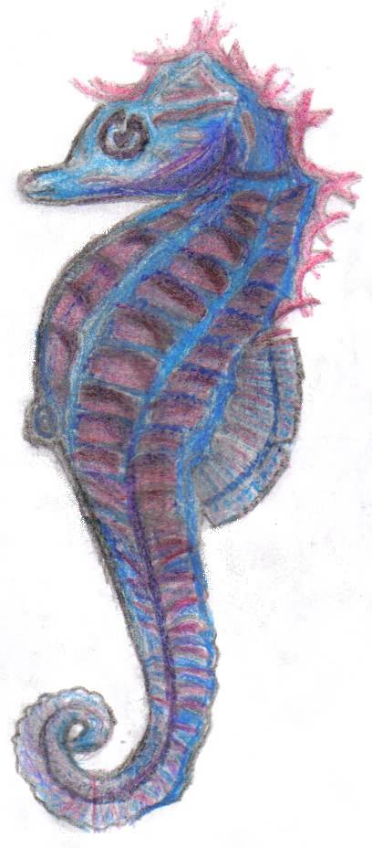 Sea Horse Tattoo Flash